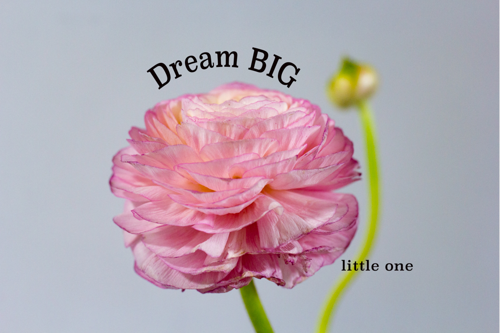 Canvas Dream Big little one